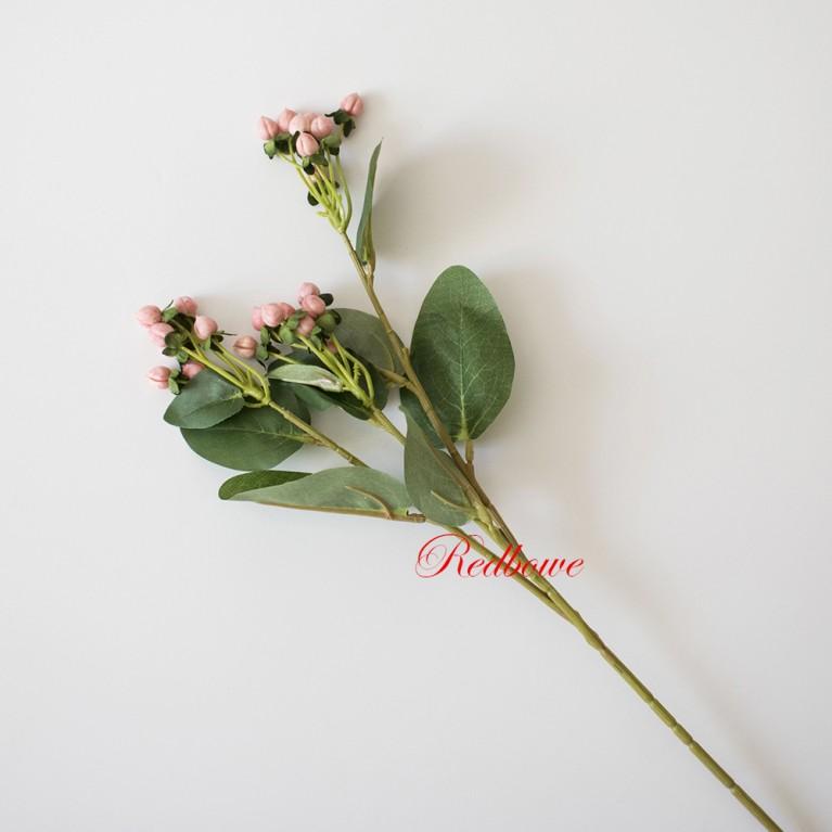 Гиперикум розовый Б345